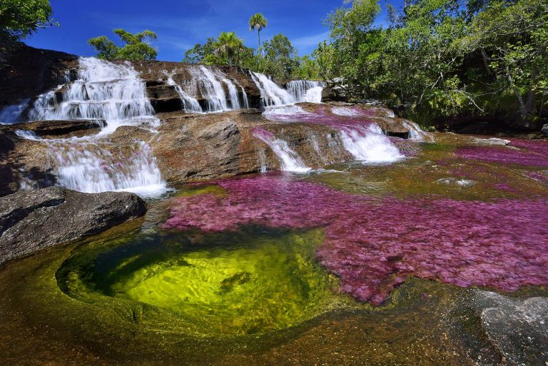 cano-cristales-fluss-in-Kolumbien